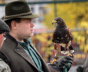 Po 20 latach nadal z ptakiem na rękawicy - tutaj samica harrisa